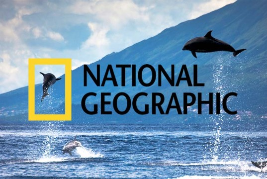 National Geographic have named the 10 destinations they believe to be the best places on Earth to watch whales and dolphins
