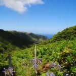 Santa Maria Island - Azores