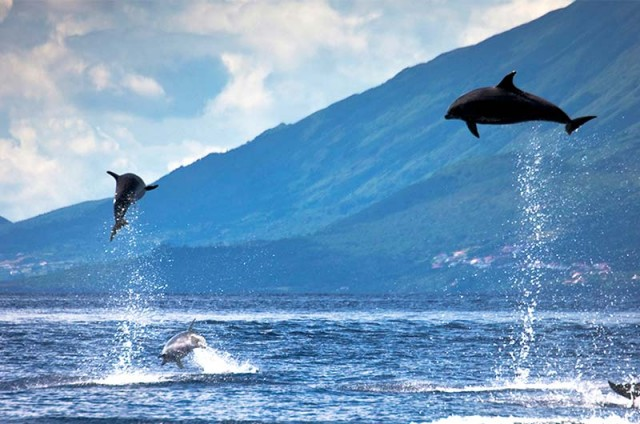 Whale Heritage Sites Summit