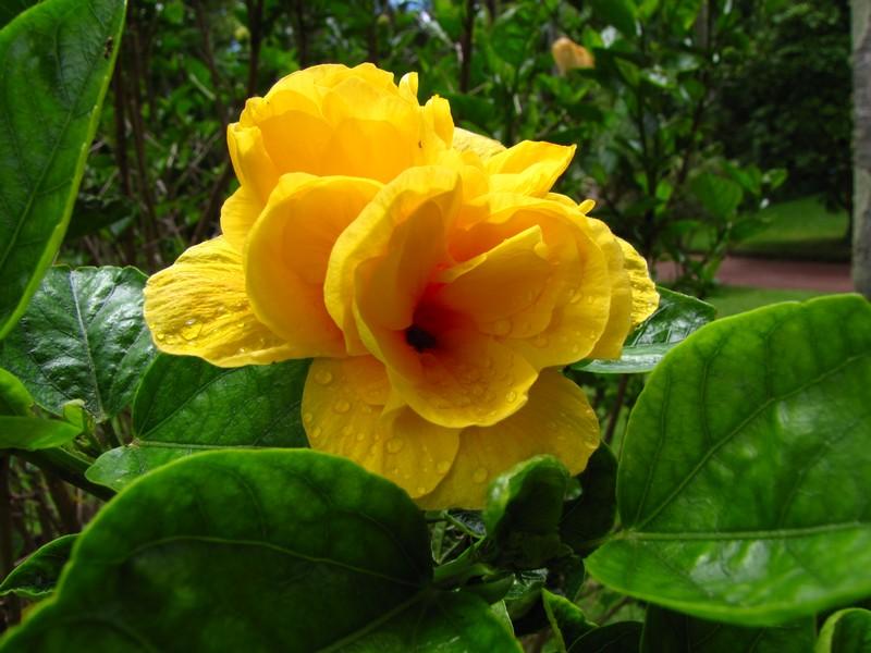 Autum Flowers at Parque Terra Nostra