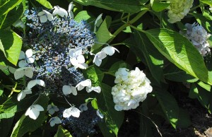 Flowers Santa Maria
