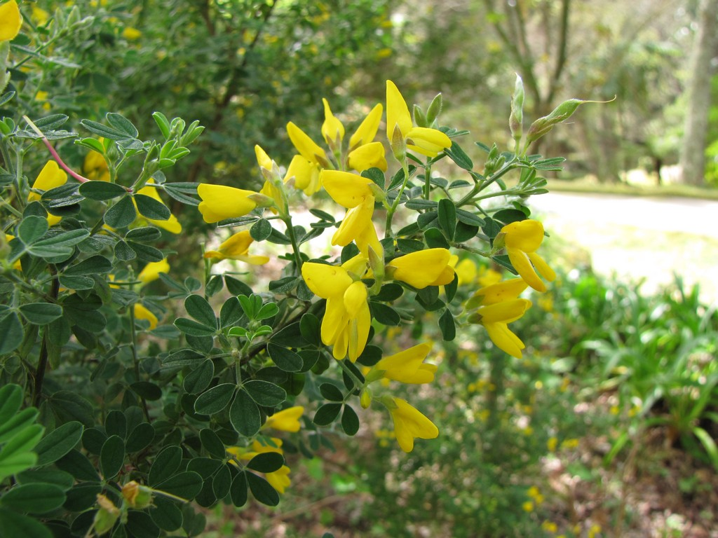 Spring Flowers at Parque Terra Nostra