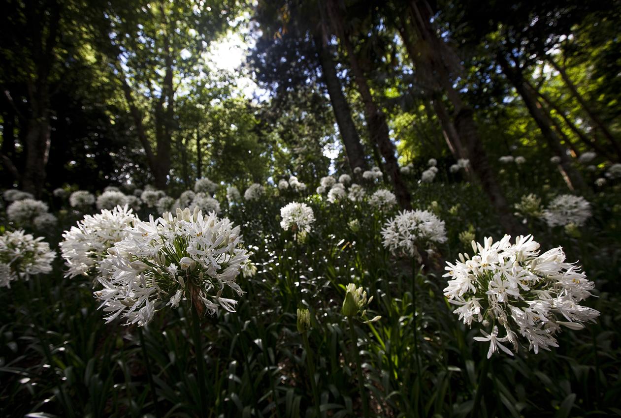 Summer Flowers at Parque Terra Nostra