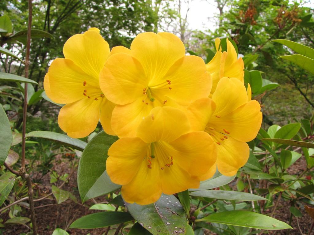 Winter Flowers at Parque Terra Nostra