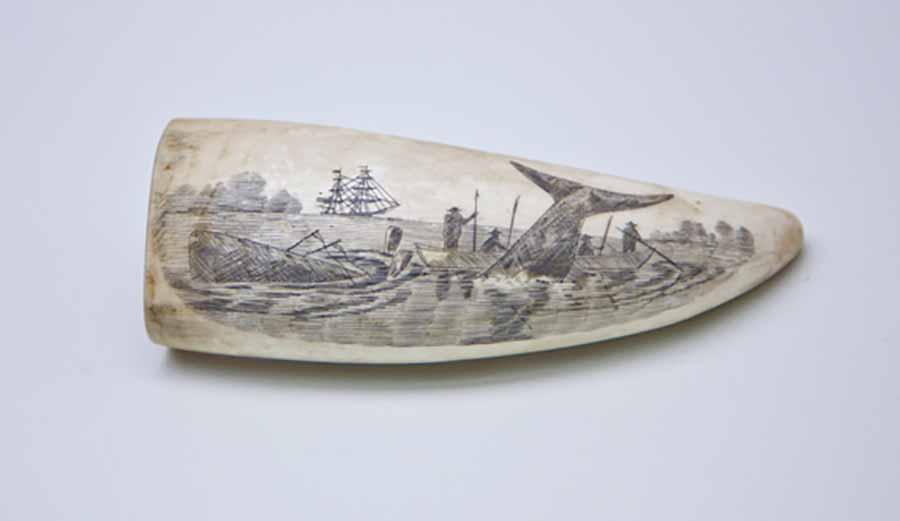 Scrimshaw carving depicting an Azorean whale hunt carved on a whale's tooth
