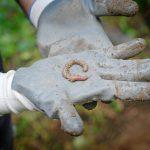 volcanic-earthworm1-2
